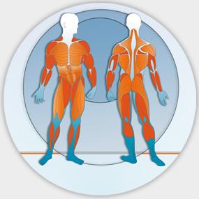 Rudern trainiert über 80% der Muskulatur