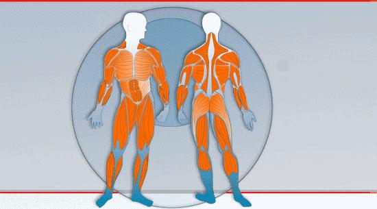 Beanspruchte Muskeln
